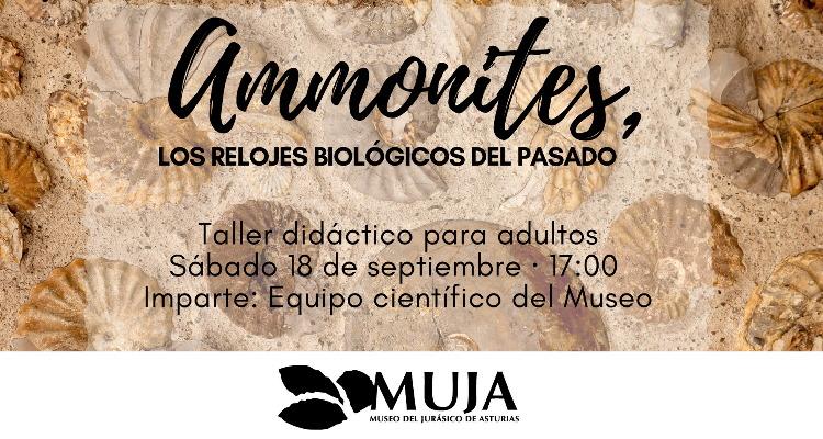 Ammonites: los relojes biológicos del pasado