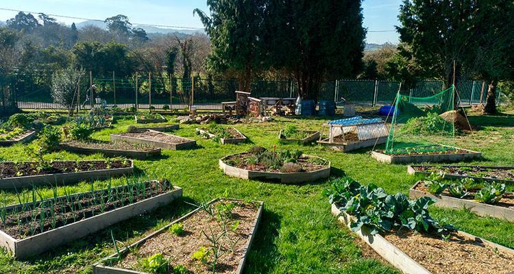 curso-de-horticultura-urbana