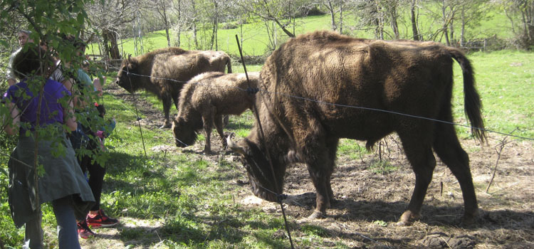 Asturias con niños: Itinerario de verano: conoce el entorno que nos rodea, en el Parque de la Prehistoria